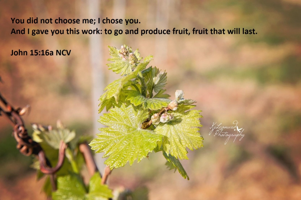 Bible Verse John 15:16a NCV